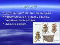 Бджоли Існує близько 25-30 тис. різних бджіл. Живляться лише нектаром і пилко...