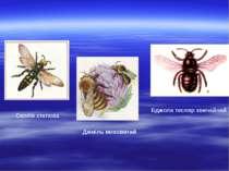 Сколія степова Джміль моховитий Бджола тесляр звичайний