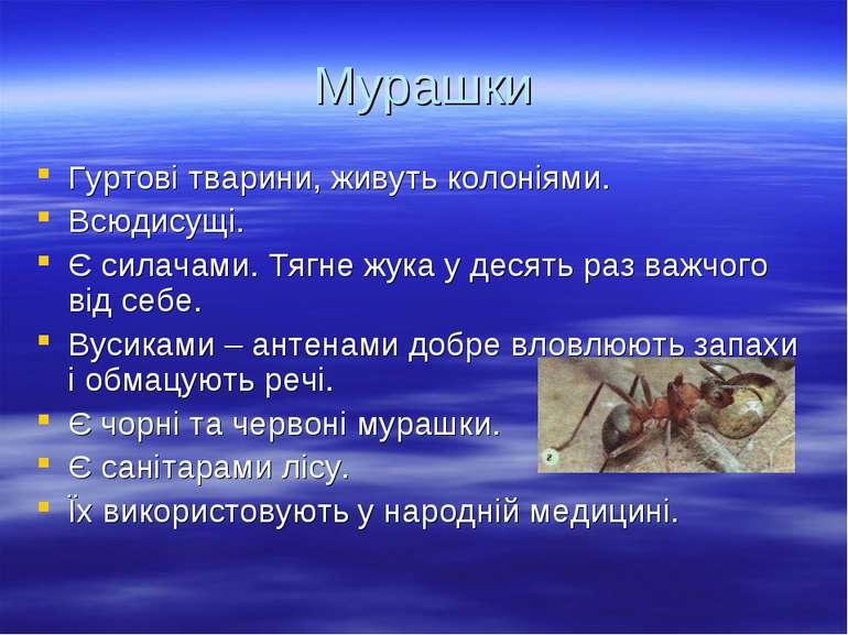 Мурашки Гуртові тварини, живуть колоніями. Всюдисущі. Є силачами. Тягне жука ...