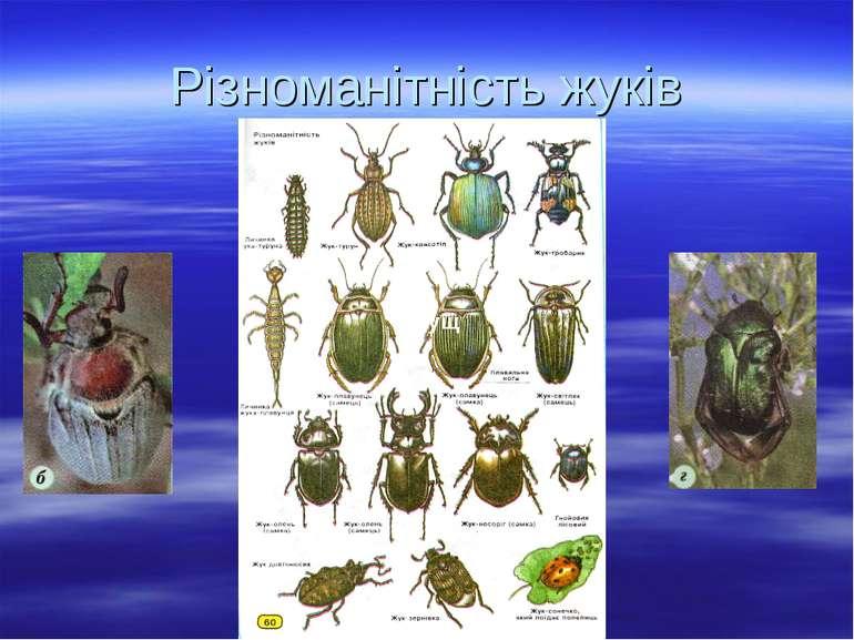 Різноманітність жуків Жрущ Жрущ