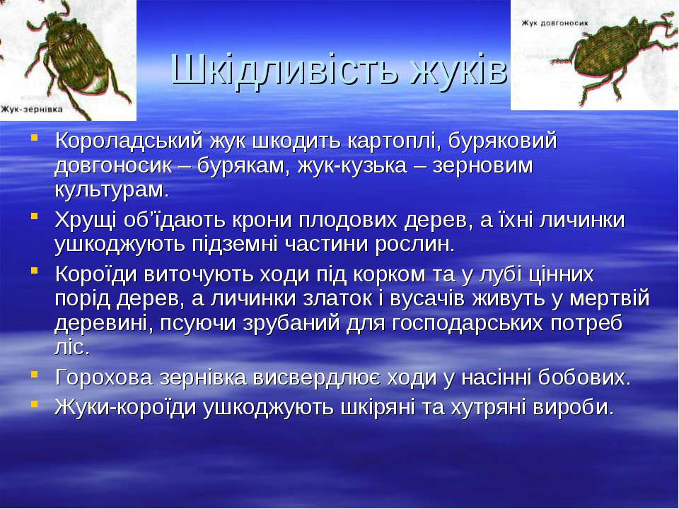 Шкідливість жуків Короладський жук шкодить картоплі, буряковий довгоносик – б...