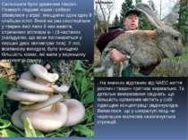 . . На значних відстанях від ЧАЕС життя рослин і тварин протікає нормально. Т...