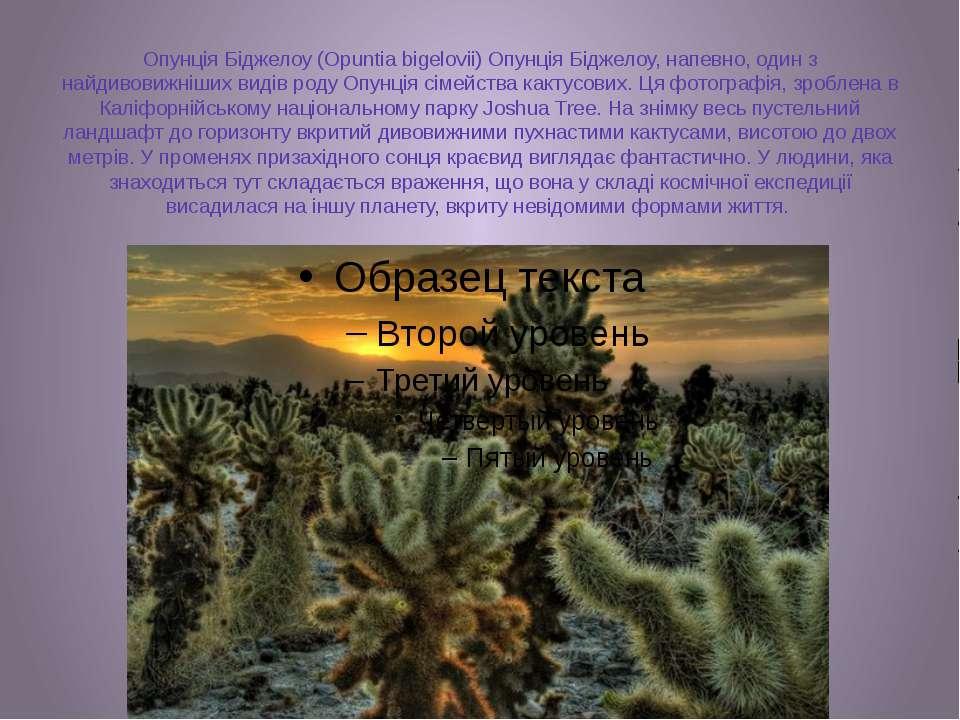 Опунція Біджелоу (Opuntia bigelovii) Опунція Біджелоу, напевно, один з найдив...
