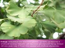 8 місце: Найдавніше нині зростаюче дерево - це гінкго, що виростає в китайськ...