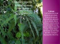 2 місце: Найнебезпечніша жалюча рослина - Новозеландське кропив'яне дерево. В...