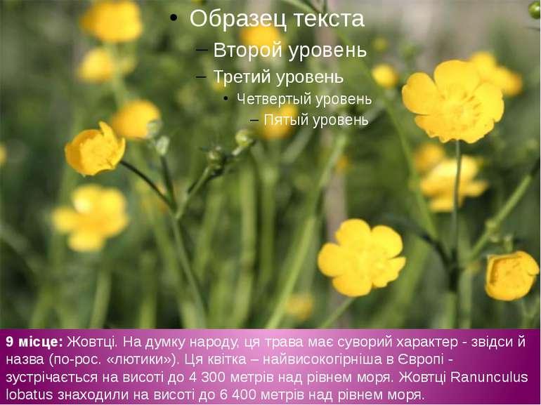 9 місце: Жовтці. На думку народу, ця трава має суворий характер - звідси й на...