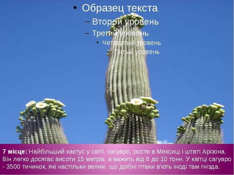 7 місце: Найбільший кактус у світі, сагуаро, росте в Мексиці і штаті Арізона....
