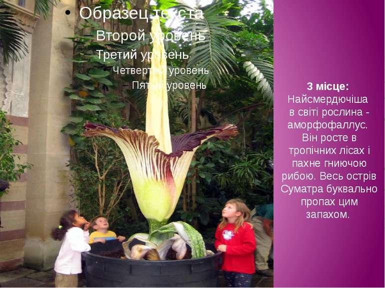 3 місце: Найсмердючіша в світі рослина - аморфофаллус. Він росте в тропічних ...