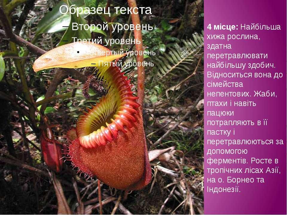 4 місце: Найбільша хижа рослина, здатна перетравлювати найбільшу здобич. Відн...
