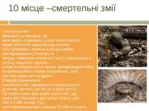 10 місце –смертельні змії Смертельнізмії МешкаютьвАвстралії.Всі вониведу...
