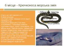 6 місце - Крючконосаморськазмія Отрутуцієї зміїоцінюютьв 4-8разівсильн...