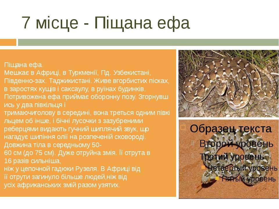 7 місце - Піщанаефа Піщанаефа. МешкаєвАфриці,вТуркменії,Пд.Узбекистан...