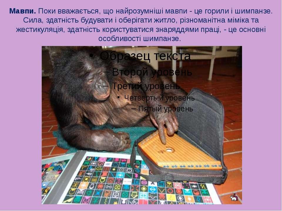 Мавпи. Поки вважається, що найрозумніші мавпи - це горили і шимпанзе. Сила, з...