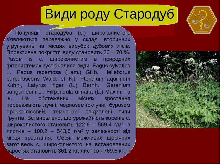 Види роду Стародуб Популяції стародуба (с.) широколистого з'являються переваж...