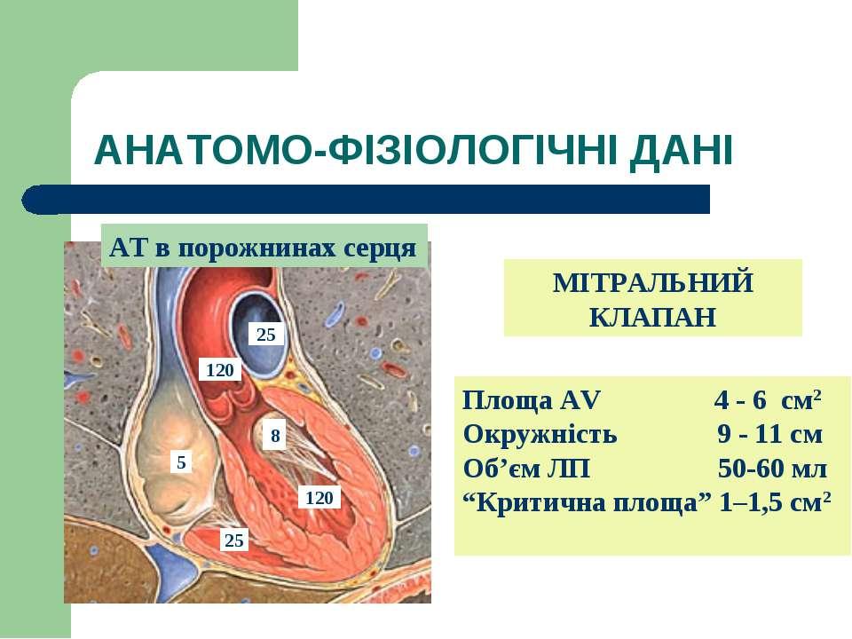 АНАТОМО-ФІЗІОЛОГІЧНІ ДАНІ АТ в порожнинах серця Площа AV 4 - 6 см2 Окружність...