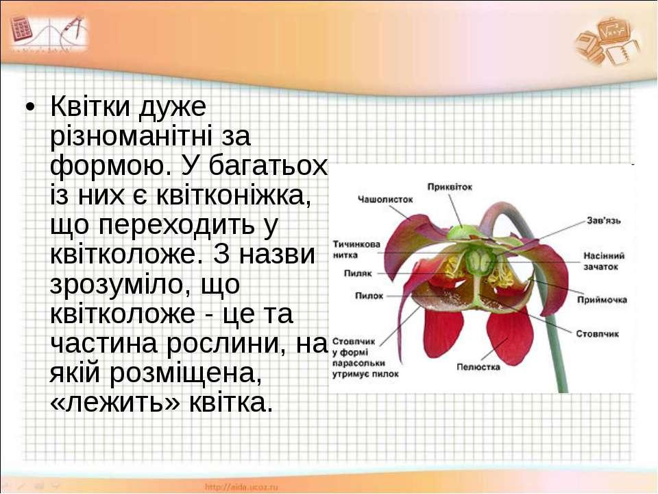 Квітки дуже різноманітні за формою. У багатьох із них є квітконіжка, що перех...