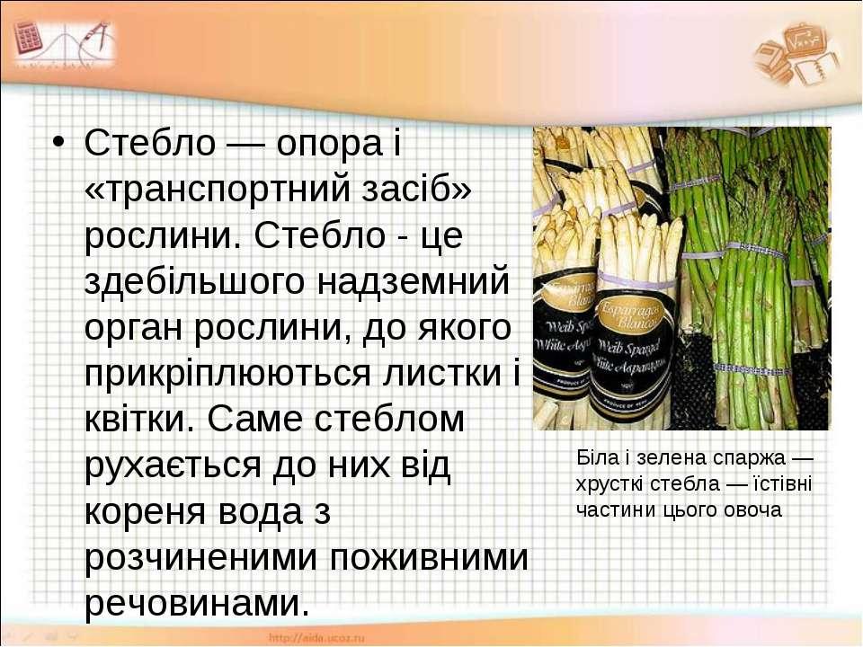 Стебло — опора і «транспортний засіб» рослини. Стебло - це здебільшого надзем...
