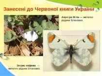 Занесені до Червоної книги України Зегрис евфема — метелик родини біланових. ...