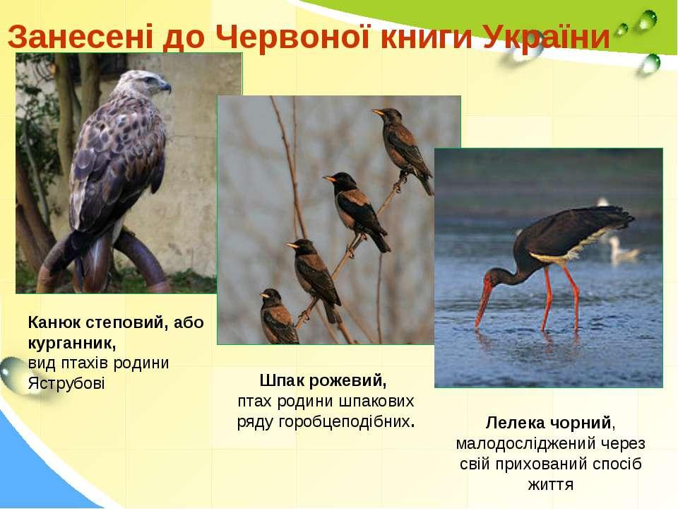 Занесені до Червоної книги України Шпак рожевий, птах родини шпакових ряду го...