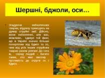 Шершні, бджоли, оси… Згадуючи небезпечних тварин, відразу приходять на думку ...
