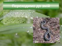 Переходимо до змій В Україні з 11 видів змій отруйні тільки гадюки. В лісах П...