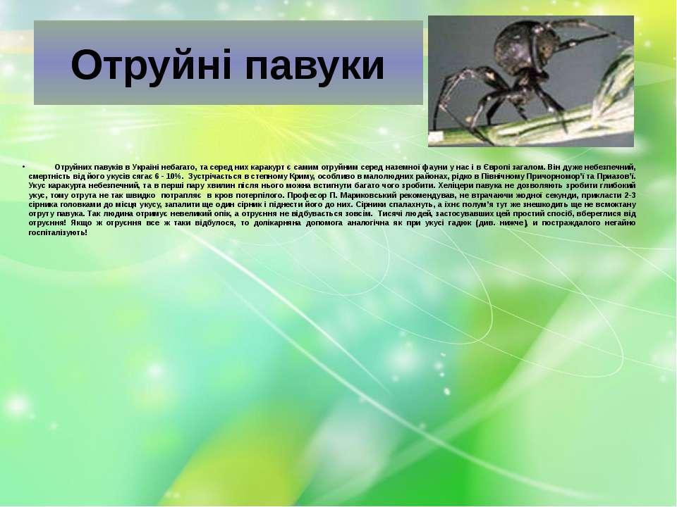 Отруйні павуки  Отруйних павуків в Україні небагато, та серед них ...