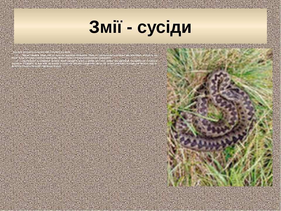 Змії - сусіди Тим, кого непокоїть сусідство змій, спеціалісти радять: 1....