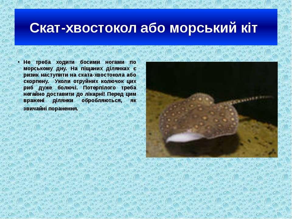 Скат-хвостокол або морський кіт Не треба ходити босими ногами по морському дн...