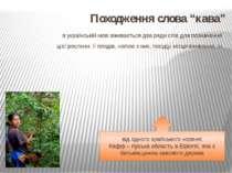 """Походження слова """"кава"""" в українській мові вживається два ряди слів для позна..."""