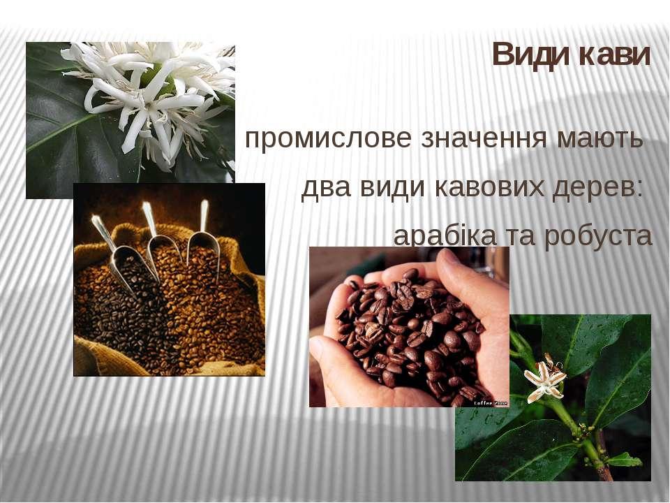 Види кави промислове значення мають два види кавових дерев: арабіка та робуста