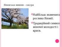 Японська вишня - сакура Найбільш знаменита рослина Японії. Традиційний символ...