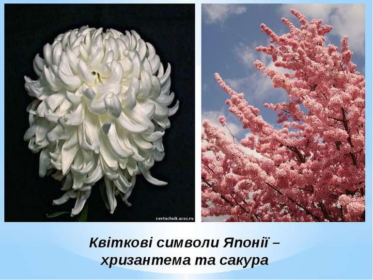 Квіткові символи Японії – хризантема та сакура