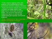 Птахи, павуки, ящірки, жаби, хижі комахи та інші комахоїди успішно регулюють ...