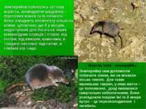 Землерийки приносять суттєву користь, винищуючи шкідників - ґрунтових комах т...