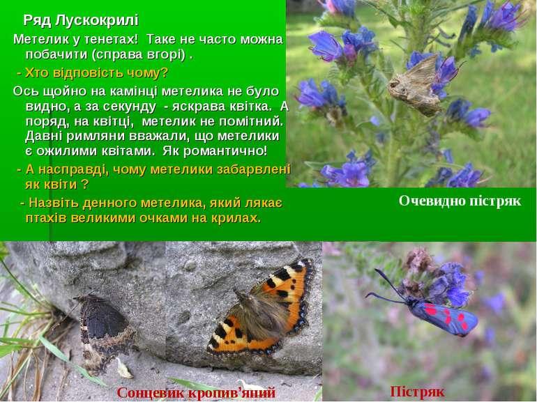 Ряд Лускокрилі Метелик у тенетах! Таке не часто можна побачити (справа вгорі)...