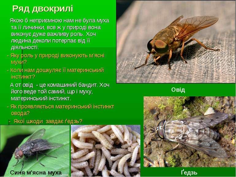 Ряд двокрилі Якою б неприємною нам не була муха та її личинки, все ж у природ...