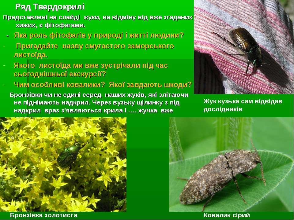 Ряд Твердокрилі Представлені на слайді жуки, на відміну від вже згаданих хижи...