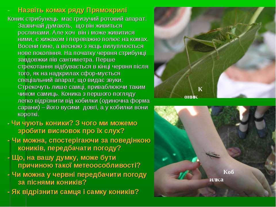 Назвіть комах ряду Прямокрилі Коник стрибунець має гризучий ротовий апарат. З...