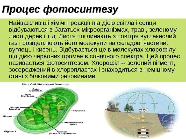 Процес фотосинтезу Найважливіші хімічні реакції під дією світла і сонця відбу...