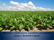 Франція – найбільший виробник і експортер цукру в Західній Європі.