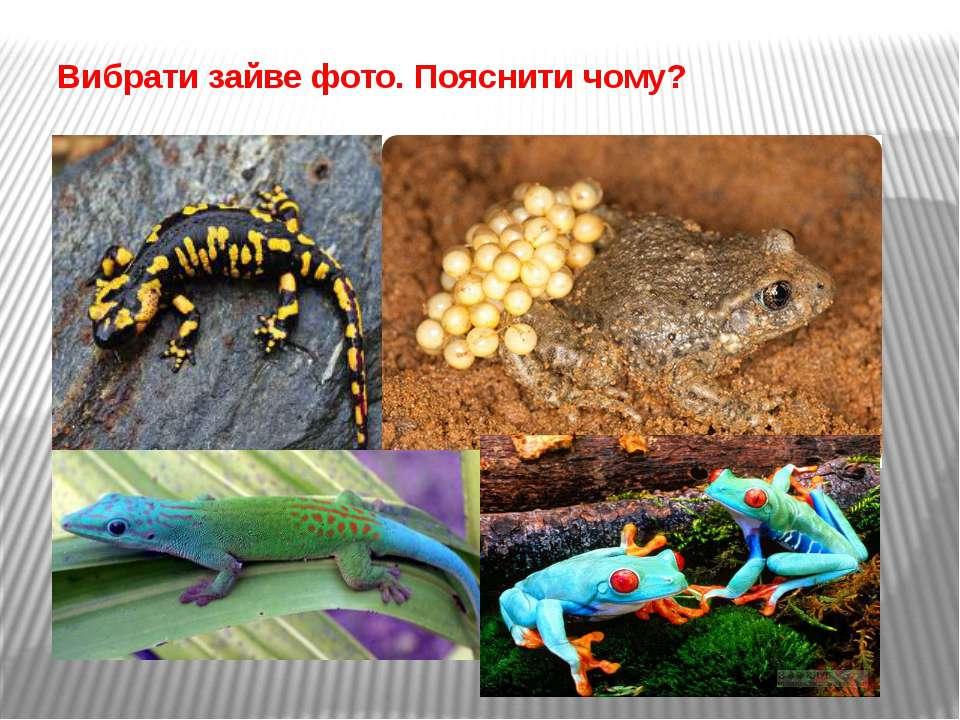 Вибрати зайве фото. Пояснити чому?