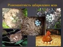 Різноманітність забарвлення яєць