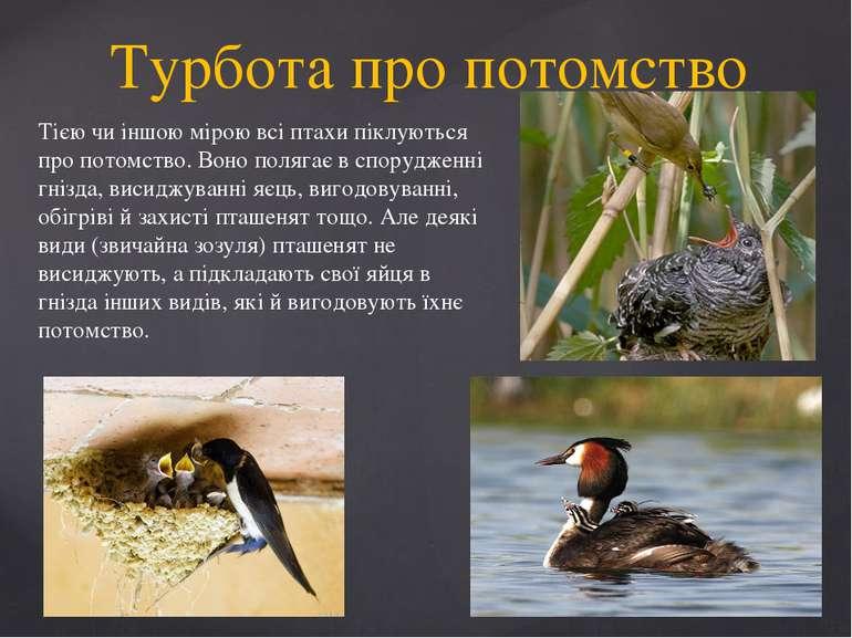 Турбота про потомство Тією чи іншою мірою всі птахи піклуються про потомство....