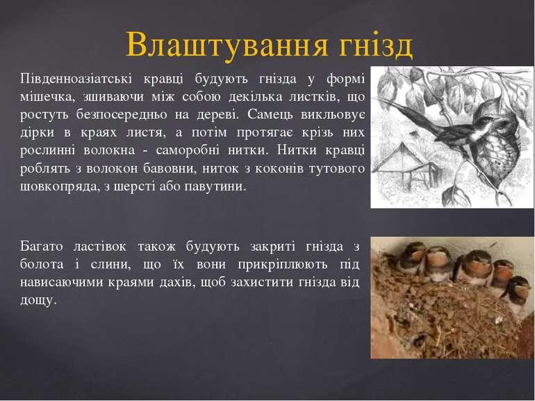 Влаштування гнізд Південноазіатські кравці будують гнізда у формі мішечка, зш...