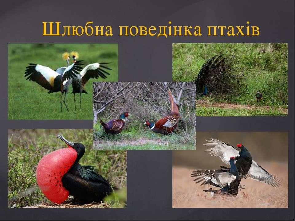 Шлюбна поведінка птахів