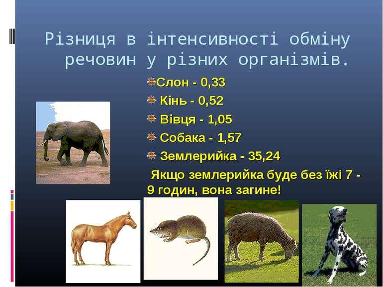 Різниця в інтенсивності обміну речовин у різних організмів. * Слон - 0,33 Кін...