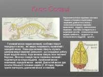 Головний мозок тварин великий, особливо півкулі переднього мозку , які зверху...