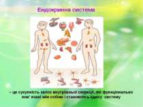 Ендокринна система – це сукупність залоз внутрішньої секреції, які функціонал...