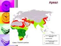 Ареал Ареал Panthera pardus
