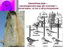 Екологічна ніша—взаємовідносинивидуабопопуляціїз екосистемою, та їхнє в...